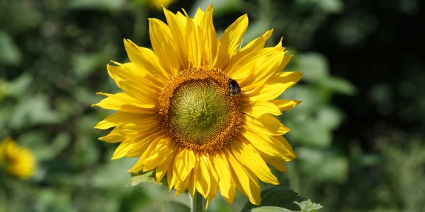 Menos insecticidas, más abejas
